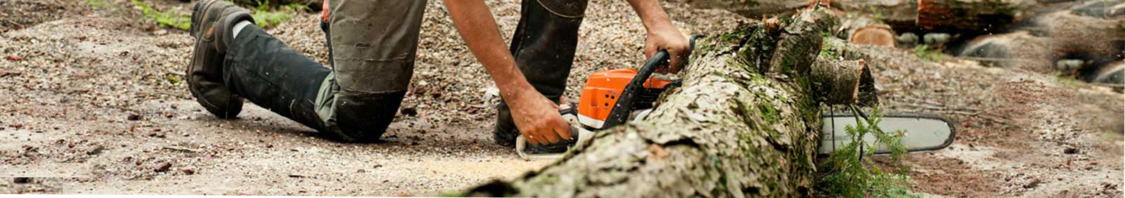 Tree care services in Rochester and Winona MN